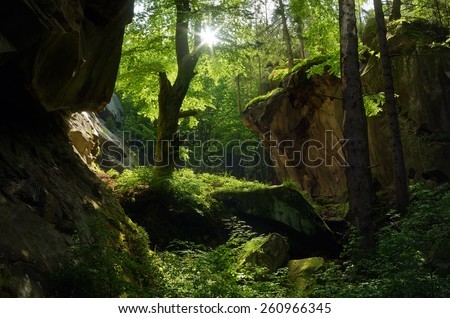 Sunny day. Beautiful fairy forest. Springtime - stock photo