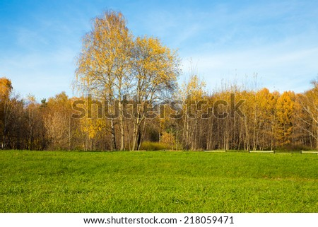 Sunny day in autumn forest - stock photo