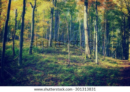 Sunny day in autumn forest, vintage landscape