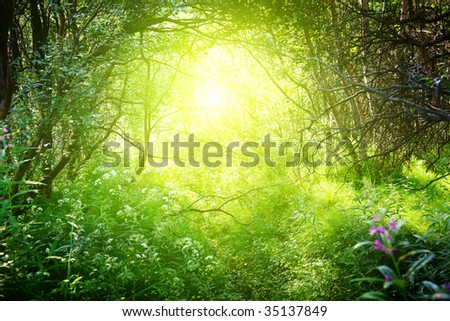 sunny day in deep forest - stock photo
