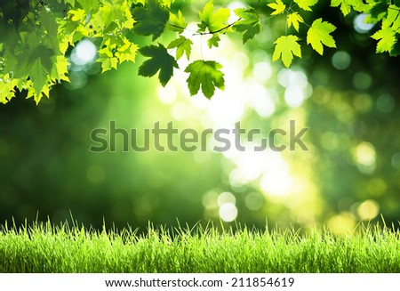 sunny day in forest - stock photo