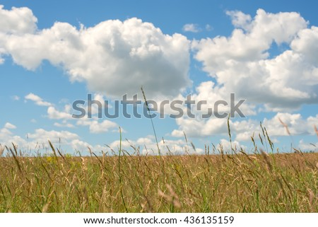 Sunny day in the prairie, yellow field under blue sky. Azov steppes, Ukraine.