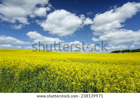 Sunny day on north Polands fields.Pomerania province/Rape field  - stock photo