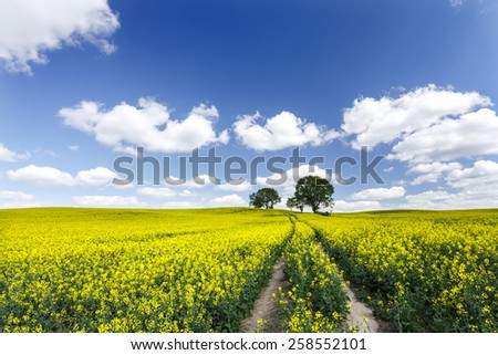 Sunny day on north Polands fields.Pomerania province/Rape field road - stock photo