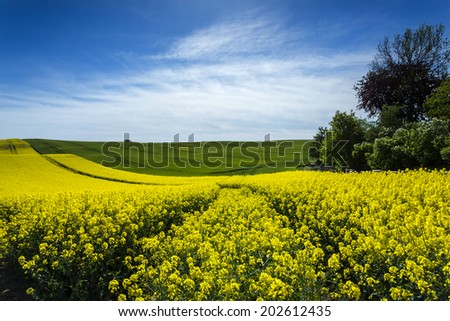 Sunny day on north Polands fields.Pomerania province/Rape field with Beehives - stock photo