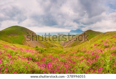Sunny day on the seaside, flowers in blossom - stock photo