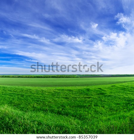 Sunny day summer rural landscape - stock photo