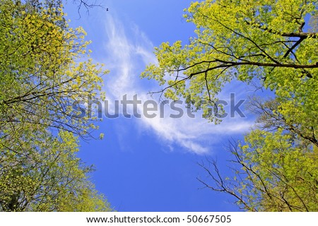 Sunny day with blue sky framed by bright green trees