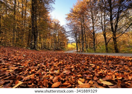 Sunny fall park with fallen leaves and road in Slovenia. Golden and orange branches on trees. Close-up view on red fallen foliage on a ground. - stock photo