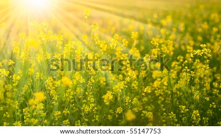 Sunny flower field - stock photo