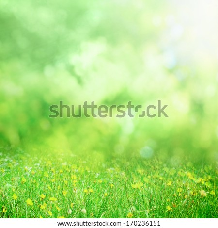 sunny flower meadow background - stock photo