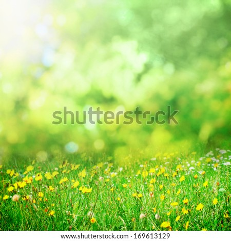 Sunny flower meadow in spring