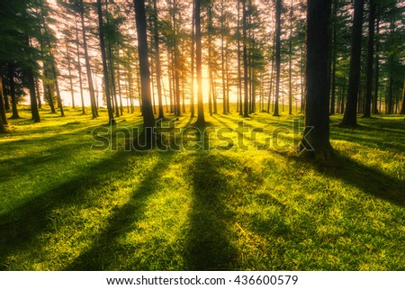 sunny forest at sunset with trunk shadows - stock photo