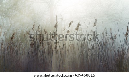 Sunny forest early in the morning on the edge of the lake, misty landscape, trees in the foreground, Dry reeds, spring
