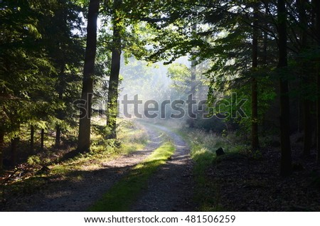 sunny forest road, south Bohemia, Czech Republic