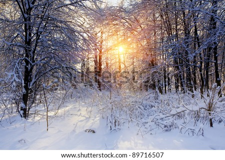Sunny forest under snow - stock photo
