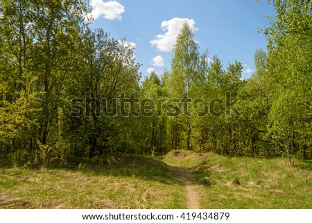 Sunny glade in the green spring forest. - stock photo