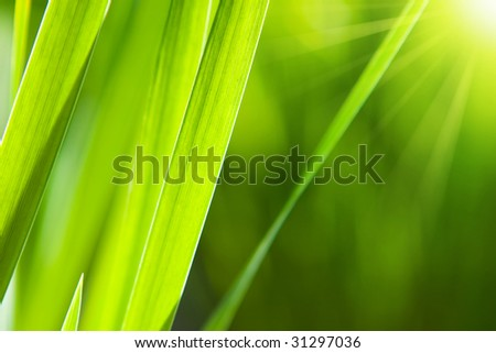 sunny grass - stock photo