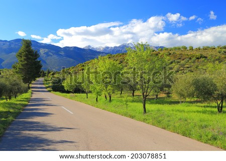 Sunny Greek road surrounded by orchards of olive trees, Greece - stock photo