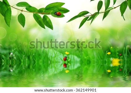 sunny green leaves with ladybugs reflecting in water - stock photo