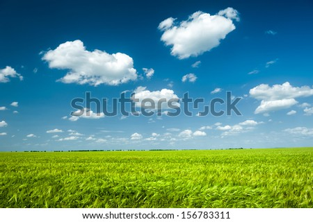 Sunny green wheat field and blue sky
