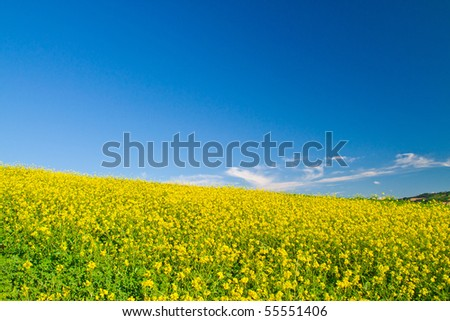 Sunny hillside landscape - stock photo