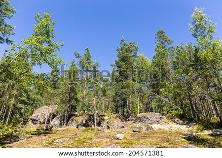 sunny landscape in summer forest with rocks and sky