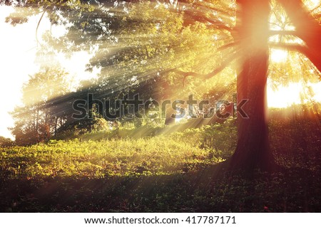 Sunny landscape in the forest with bright sunbeams breaking through the branches. Autumn forest landscape - stock photo