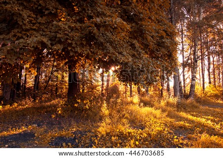 Sunny landscape in the forest with bright sunlight - stock photo