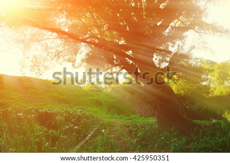 Sunny landscape in the forest with bright sunlight breaking through the branches of old tree. Autumn forest landscape - stock photo