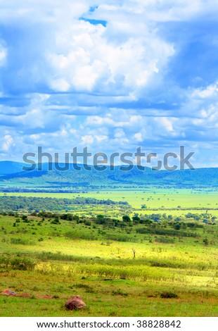 Sunny meadow. Africa. Kenya. Masai Mara - stock photo