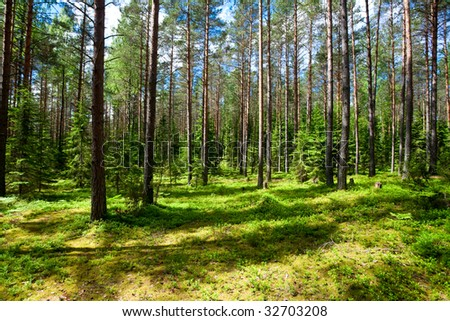 Sunny meadow at  summer forest - stock photo