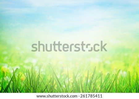 Sunny meadow in sunlight - stock photo