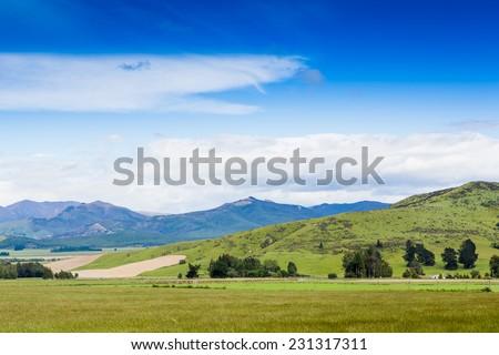 Sunny meadow. New Zealand  - stock photo