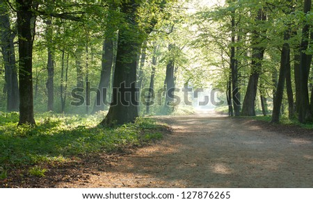 Sunny morning in the summer forest. Landscapes