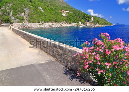 Sunny road decorated with Mediterranean vegetation along Adriatic sea, Trsteno, Croatia - stock photo