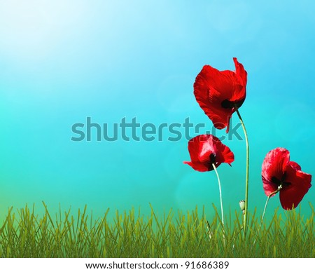 Sunny sky and red poppies in green grass