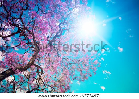 Sunny Spring day - stock photo
