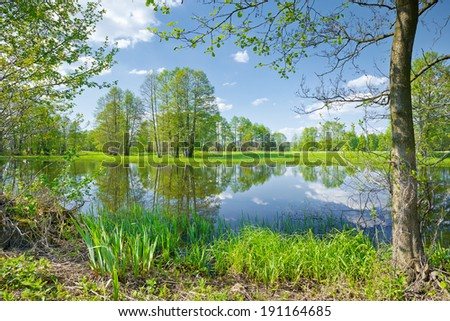 Sunny spring landscape. Trees at riverbank. Flood waters of The Narew River, Poland. - stock photo