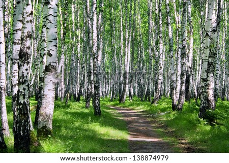 Sunny summer day in a birch wood - stock photo