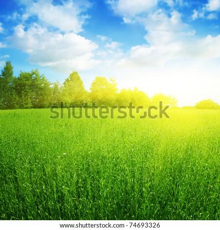 Sunny summer landscape. - stock photo