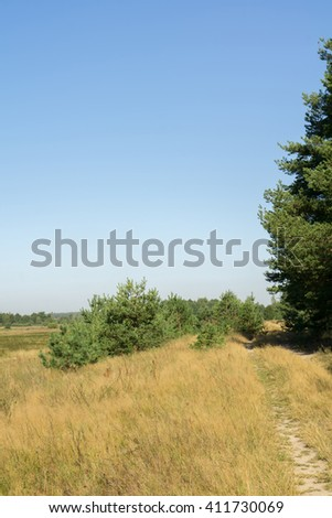 Sunny summer landscape with trees, countryside background.