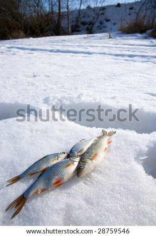 Sunny weather, deep snow and 4 small fishes - stock photo
