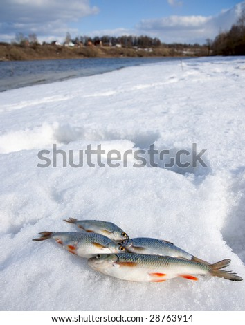 Sunny weather, deep snow on river bank and small catch - stock photo