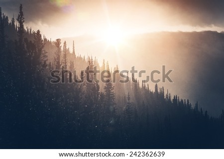 Sunny Winter Hills. Hill Forest and Falling Snow in the Sun. - stock photo