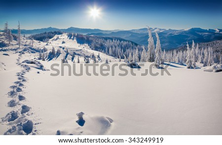 Sunny winter scene in Carpathian mountains with first sunlight glowing fresh snow. - stock photo
