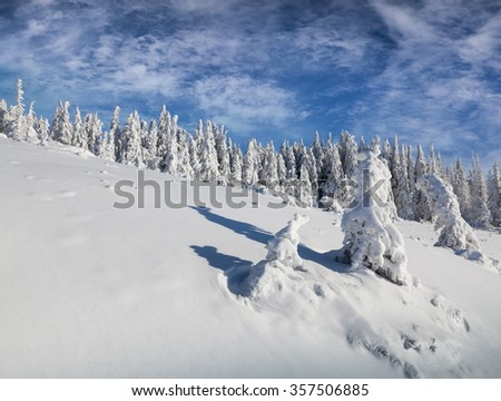Sunny winter scene in the mountains forest.