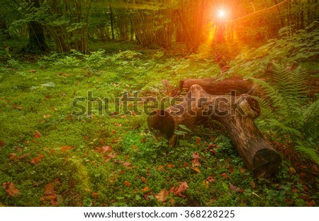 Sunny yellow better in dense green forest in Finland - stock photo