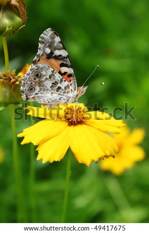 Sunny yellow flowers with butterfly  background