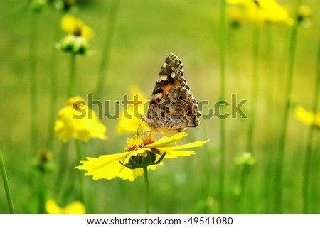 Sunny yellow flowers with butterfly  background - stock photo